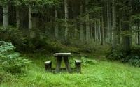 resting-place-in-the-woods-9190-2560x1600